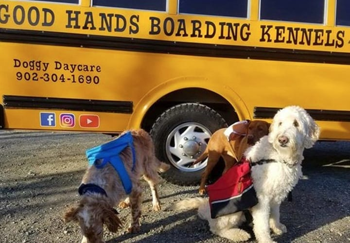 Dogs Daycare Bus