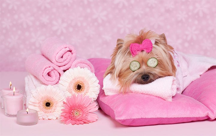 Images Of Pampered Dogs