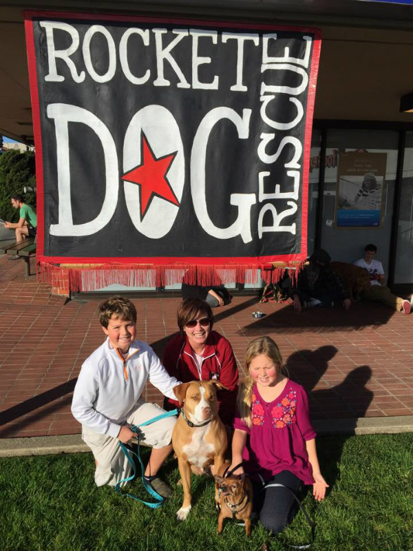 Rocket Dog Rescue Find Merrill and Taco a Home - Pit Bull Rescue Story
