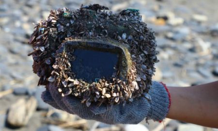 Camera Case Covered in Barnacles - Lost at Sea