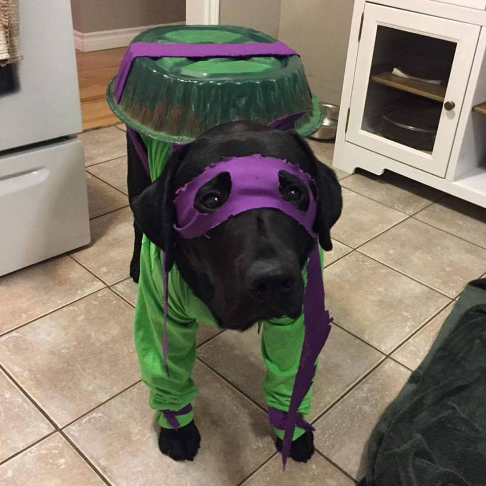 dog costume ninja turtles donatello halloween costumes