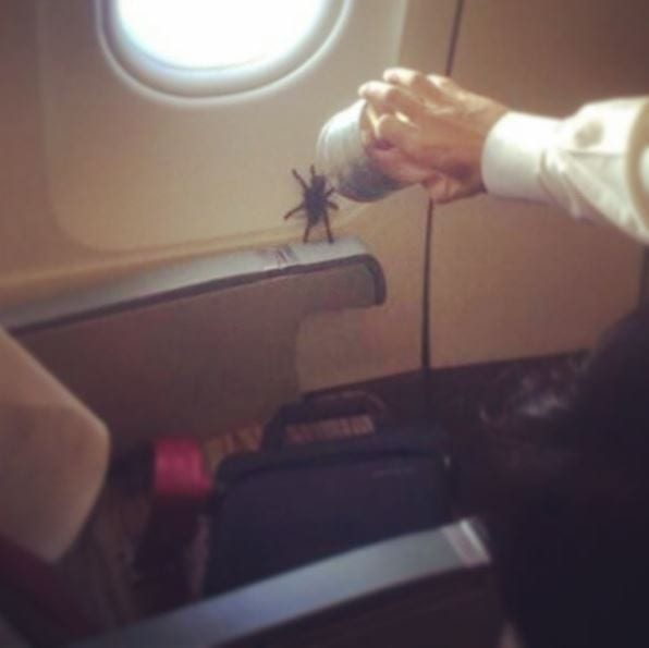 spider tarantula animal air travel plane