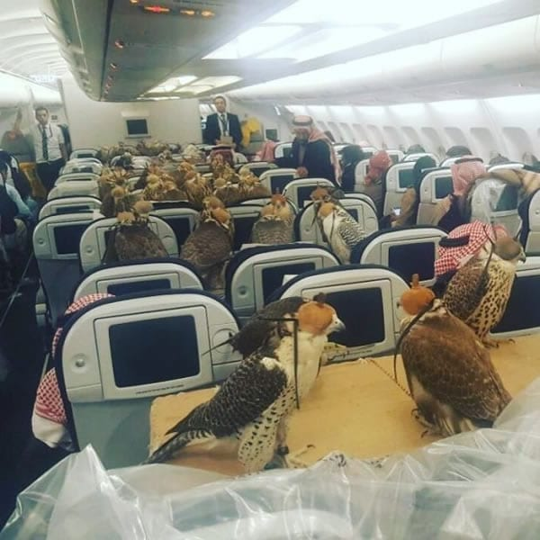falcons flight air travel