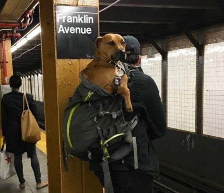 e0fb509dab8c Dog Owners Have Hysterical Response To Pet Ban On New York Subway