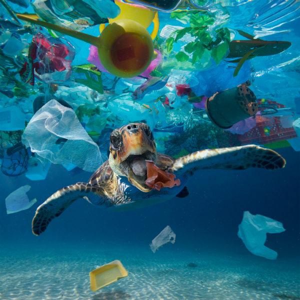 turtle garbage ocean pollution blue hole