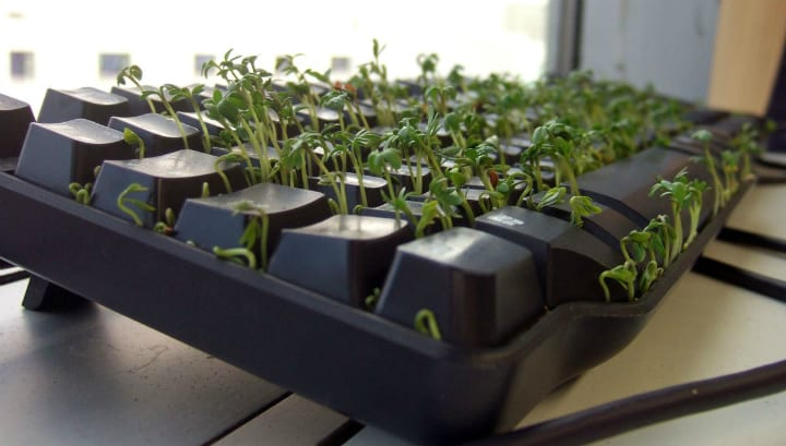 sprouts sprout vegetables growing keyboard roommate prank