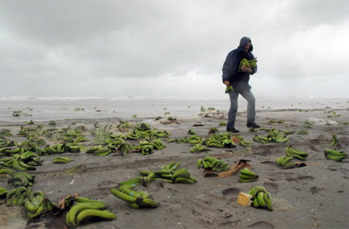 banana beach washed ashore