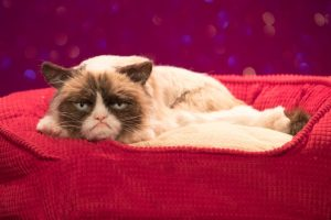 grumpy cat frown