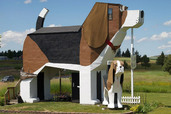 dog beagle coolest hotels