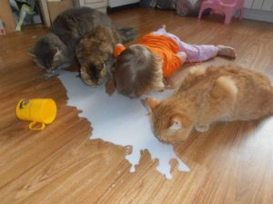 cats funny kid hilarious kids