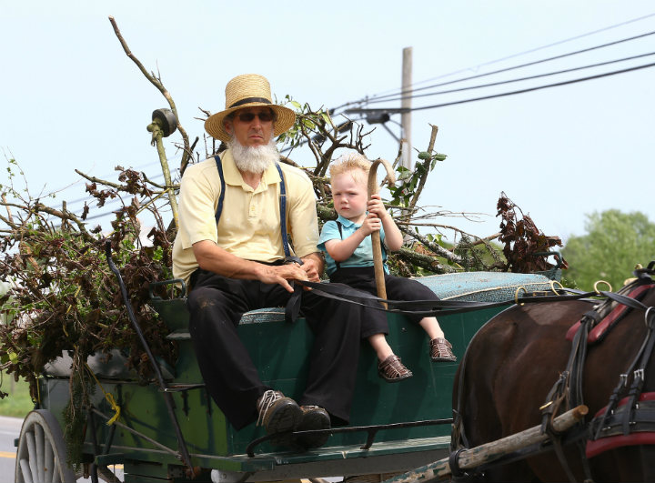 Amish Man on Buggy