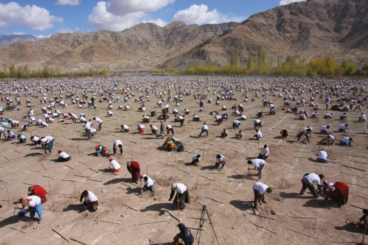 tree planting guinness world record