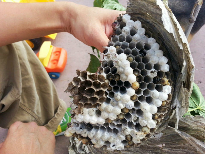 wasp hornet bee nest inside everyday objects