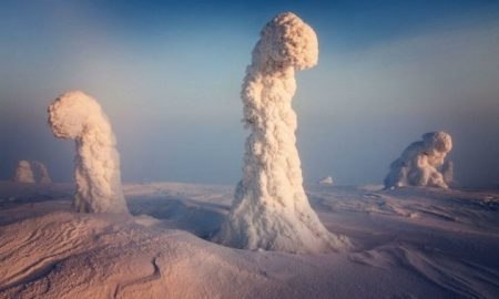 Finnish Lapland trees - natural phenomena