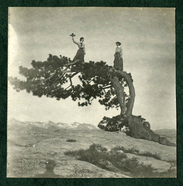 Jeffrey Pine - bygone tourist attractions