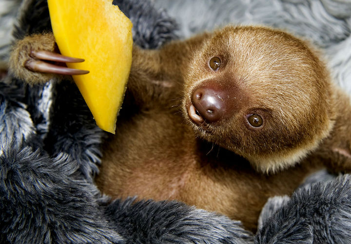 sloth - cute animals