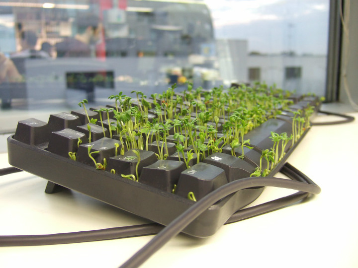 keyboard plants - epic pranks