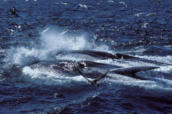 fin whale whales mammals oldest animals