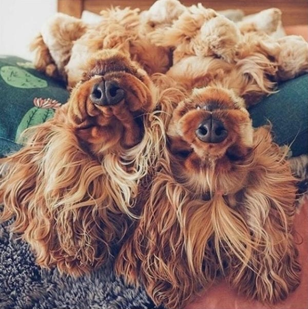 twins dogs