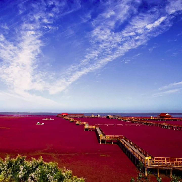 Red Beach Panjin China colorful places