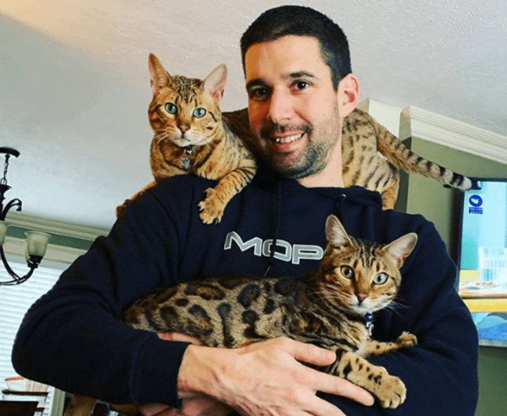 Expensive Cat Breeds