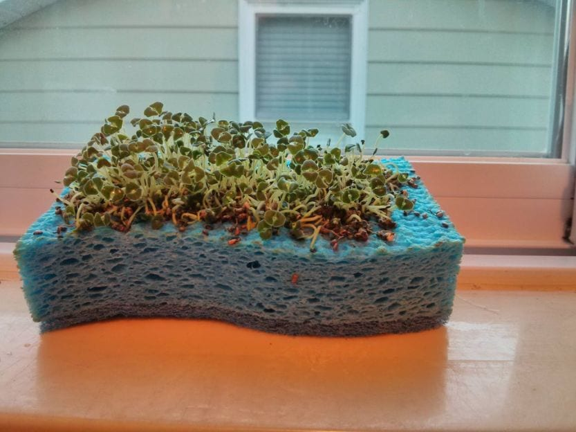 Home gardening using sponges
