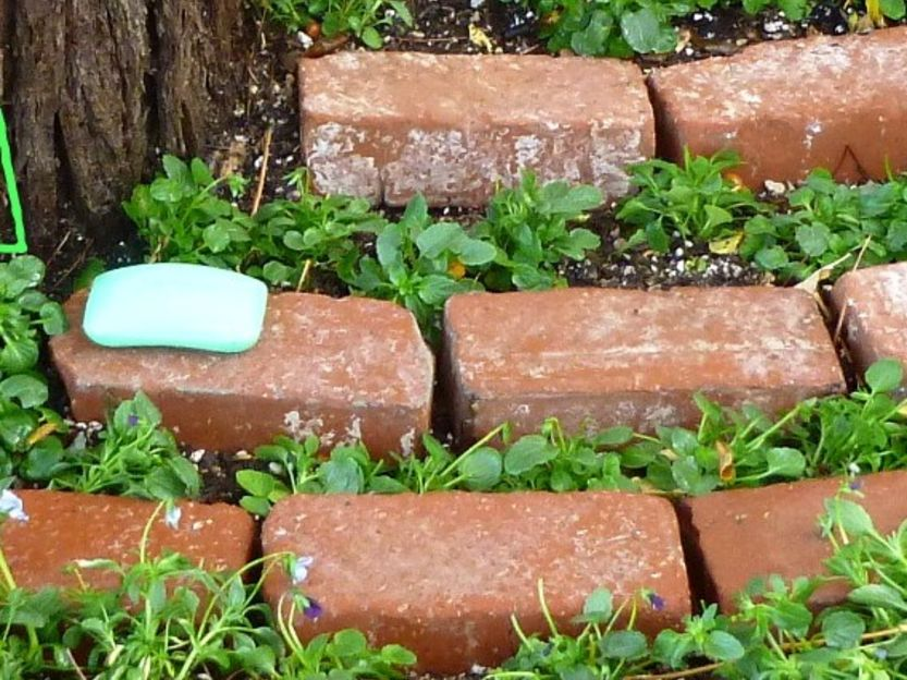 Home gardening using soap deers