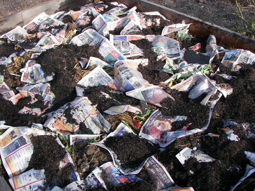 Newspaper in Garden Killing Weeds