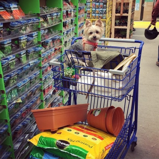 Dog at Lowe's