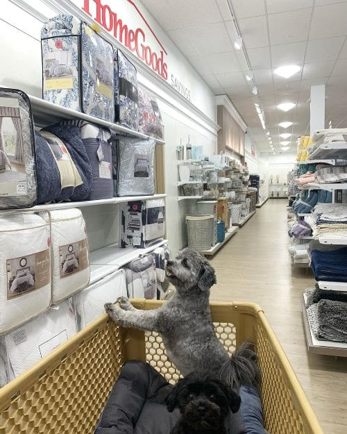 Dogs at HomeGoods