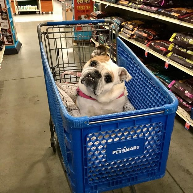 Dog in PetSmart
