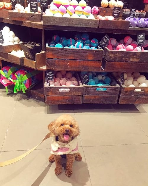 Dog at Lush Cosmetics