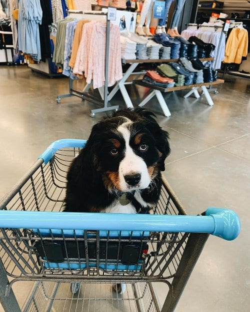 Dog at Old Navy