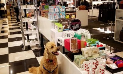 Dog in Bloomingdale's