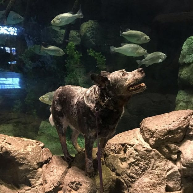 Dog at Bass Pro Shops