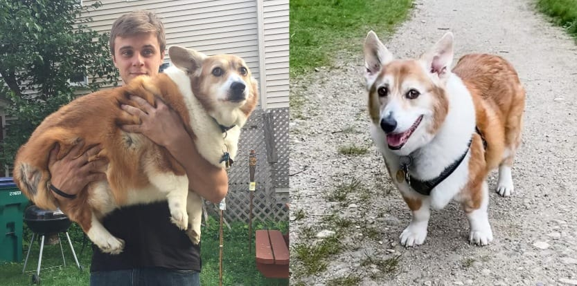 Noah dog weight loss