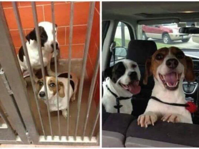 Shelter Dogs Adopted