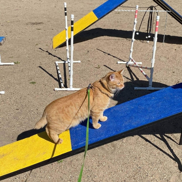 Cat on slide