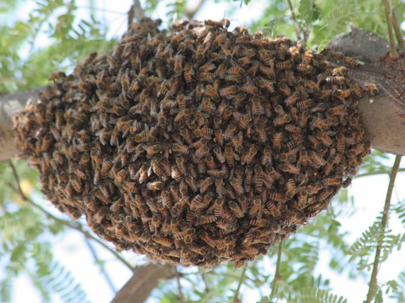 dangerous animals Killer Bee attack